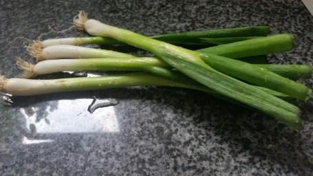 Spring Onion/Escallion