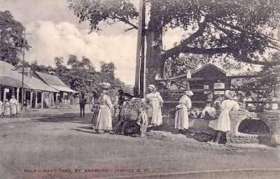 Postcard featuring market vendors under the cotton tree in Half Way Tree (Source: Jamaicans.com)