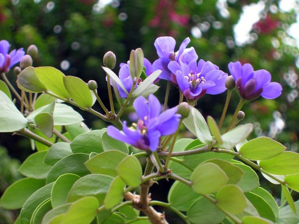 How Much Do you know About Lignum Vitae Jamaica39s