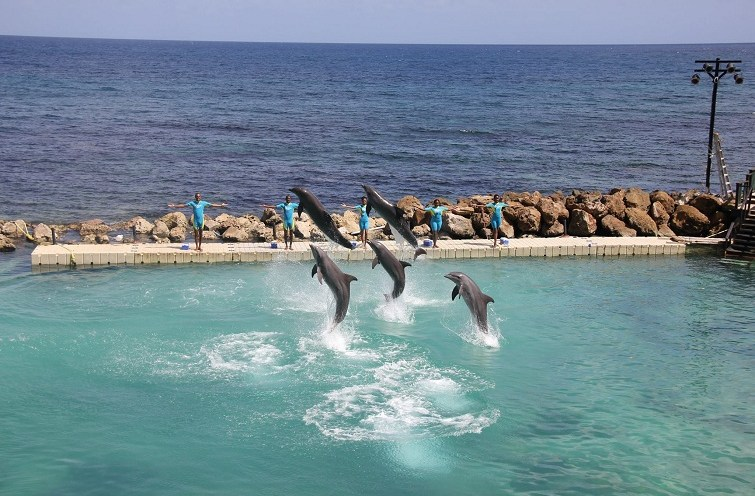 Dolphin Cove | Jamaica Wheelchair Taxi - transport for wheelchair passengers