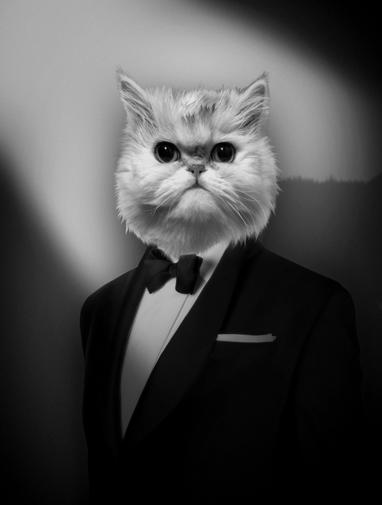 Concours  un portrait de votre chat ou chien  gagner  Jamais sans Maurice
