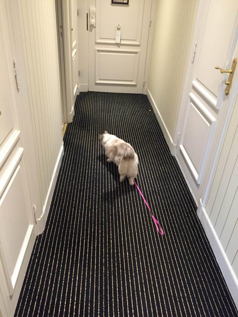 Mauricette sur la Croisette  htel Majestic  Cannes  Pet Friendly  Jamais sans Maurice