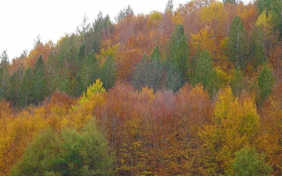 Foliage in Sila tra stupore ed emozione