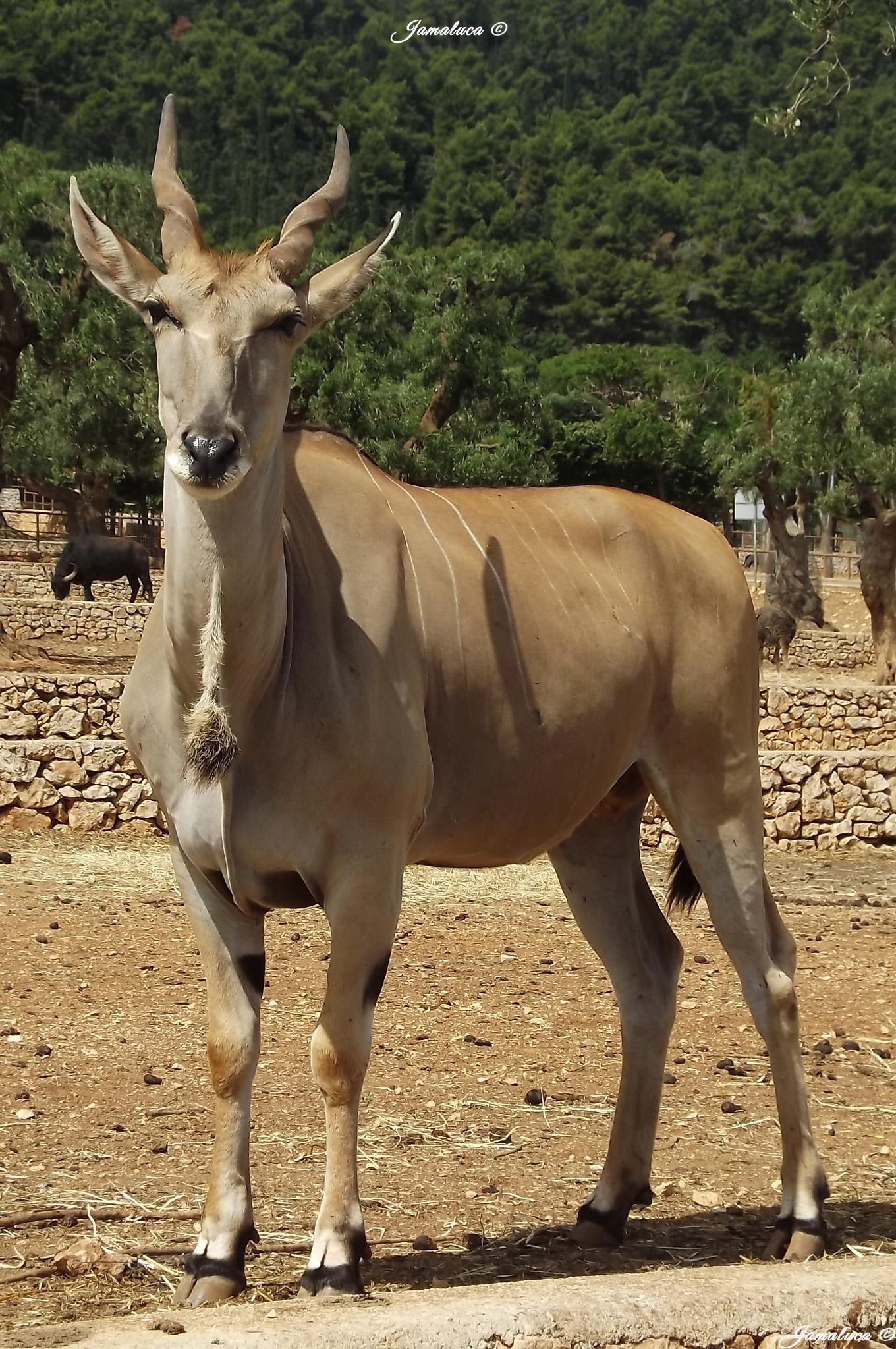 Zoosafari di Fasano: tre parchi tra flora e tantissima fauna