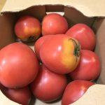 食前にトマトを食べる効果を検証してみようと思う