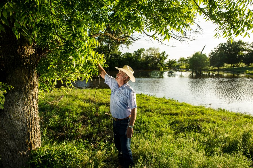 Kenneth Goodin checking his pecan tree for damage from a recent storm.