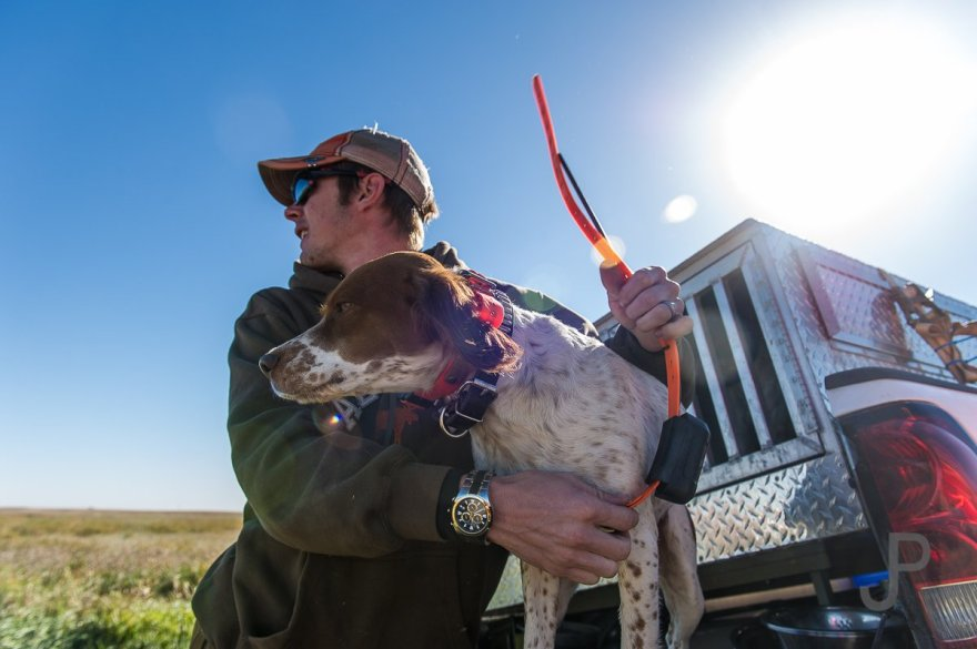 Cory Stokes removing one of his dogs from the box on his truck on the first morning of our hunt.