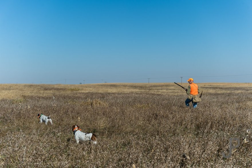 Norm Lippert has his shotgun at ready as his dog Rye points a bird in the CRP grass.