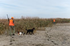 Later in the day we push a dried up cattail slew and leave tracks through the dried up middle.