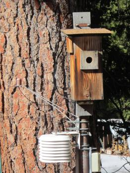 Automatic nest box allows monitoring of nesting activity