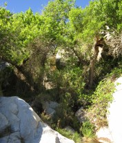 Dense riparian vegetation near waterfall