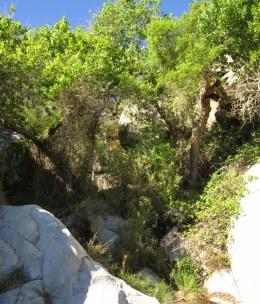 Dense riparian vegetation near waterfall