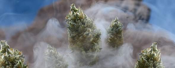 Marijuana Export Mirage James Alexander Michie