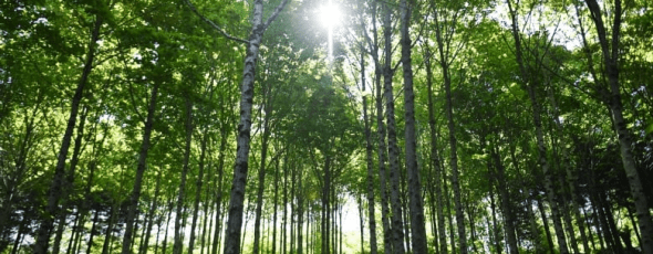 Are trees the silver bullet for capturing carbon CBC | James Alexander Michie