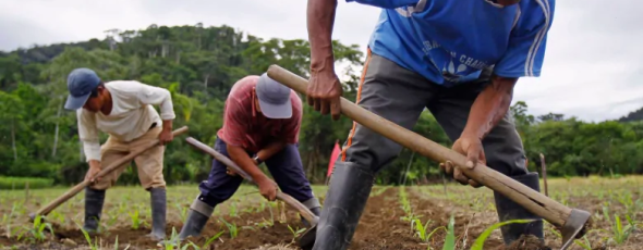 Workers turn soil containing biochar in a corn field at the Villa Carmen Biological Station in Peru CBC News | James Alexander Michie
