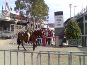 Horses Cross Here