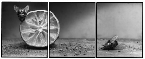 Joachim Froese Rhopography # 15 2003,3 Silver gelatin print From edition 12 50cmx120cm Esa jaske Gallery 5/12/05