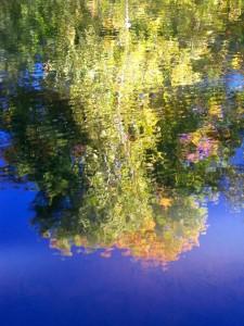 Autumn Abstract 17