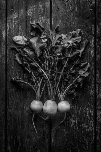 Fresh-Harvest-Series-4