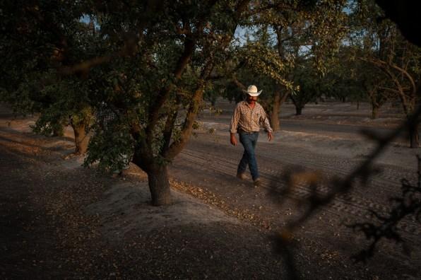 PR-Farms-Almond-Harvest-11