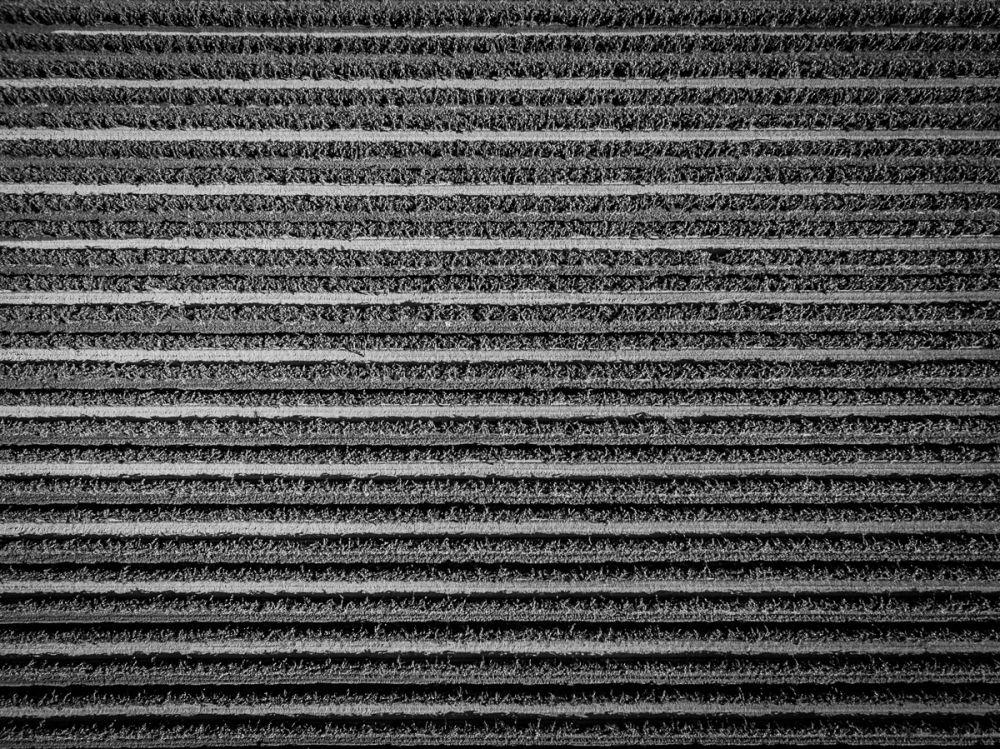 Textiles-0009