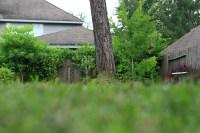 Backyard Nature  Identifying Trees | JamesCrossman.com