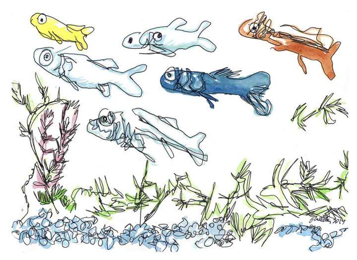 fish clr copy