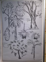 quick reference guide for drawing local trees
