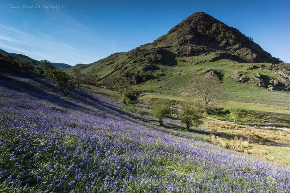 Rannerdale Bluebells - Buttermere - Lake District Photography