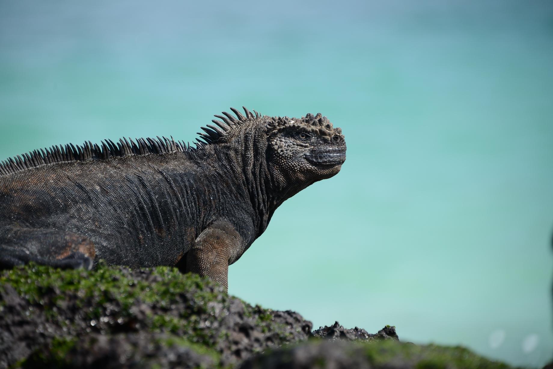 足足五萬年.跟達爾文去進化島 – 終生遊學