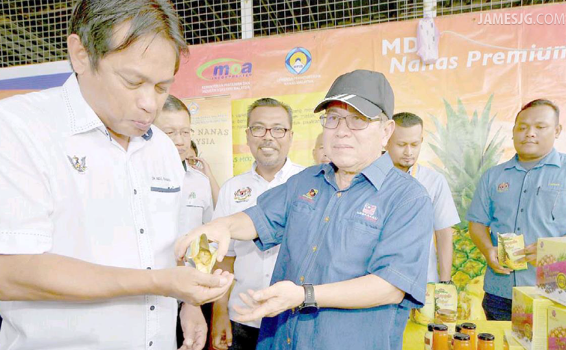 Sarawak poised to become Malaysia's largest premium pineapple hub