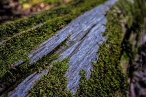 Random Picture of the Week #5: Moss Covered Log
