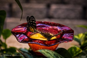 Butterflies at the Butterfly Palace in Branson, MO