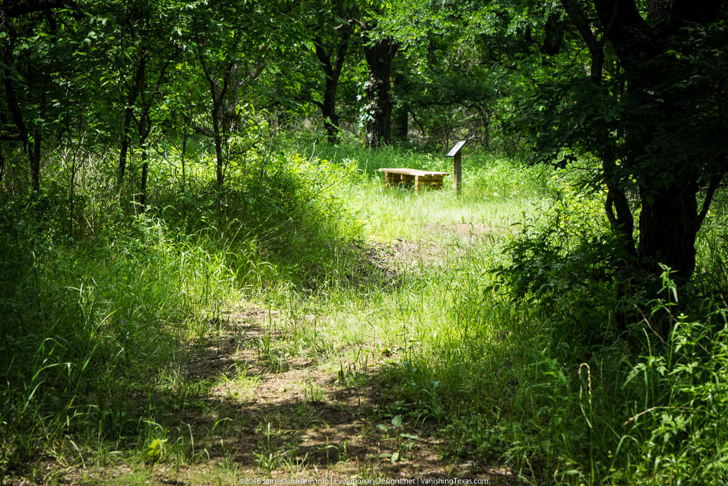 Crow Hill Trail – Hagerman National Wildlife Refuge – The Bench That Replaced the Watch Tower