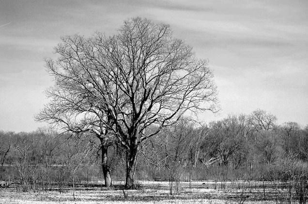 4-19-2014_Oak Ridge Forest Preserve (110)