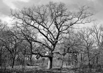 4-19-2014_Oak Ridge Forest Preserve (123)