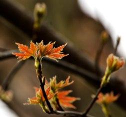 Leaves2_PP