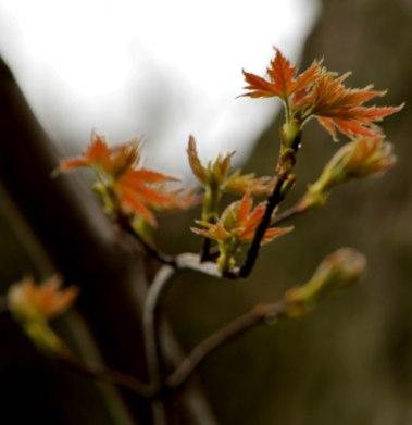 Leaves3_PP