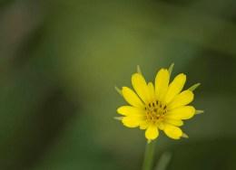 Flowers of Deer Run_3