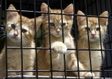 Pet- Adoption 25