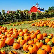 Pumpkins in the Field via Country Living Magazine