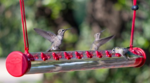 Horizontal Hummingbird Feeder