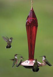 Ruby-red Glass Hummingbird Feeder