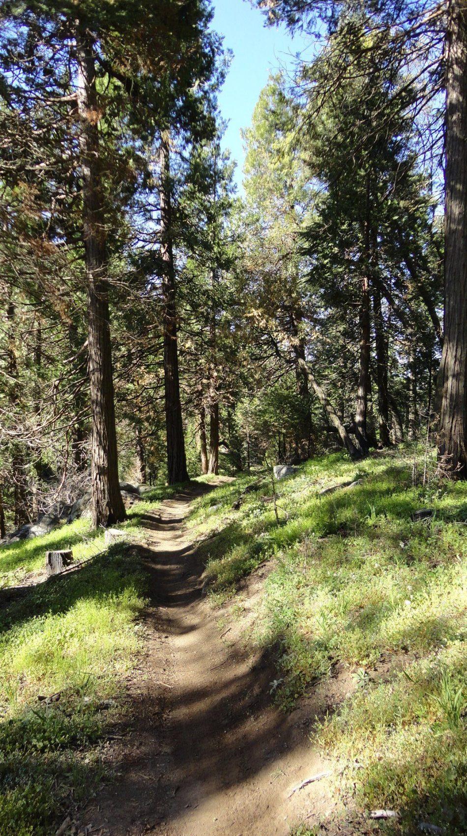 JO Trail
