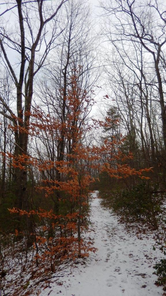 Appalachian Trail, Michaux State Forest