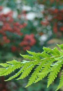 tree fern small