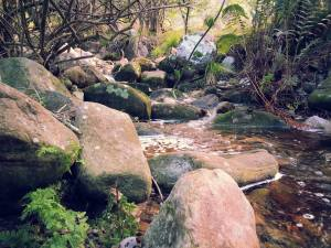little stream kirstenbosch