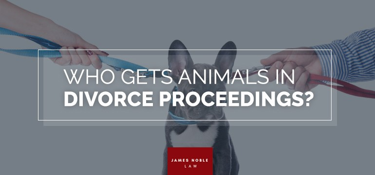 Who Gets Animals in Divorce Proceedings