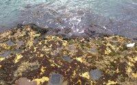Low Tide at Circular Quay