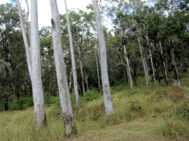 Bushland near the Gympie Muster site